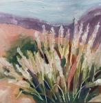 11 Desert Grasses