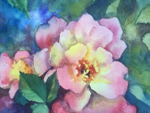 68 Old Roses.JPG