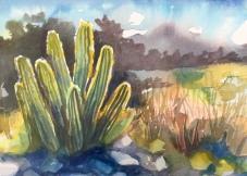 1908 Desert Cacti